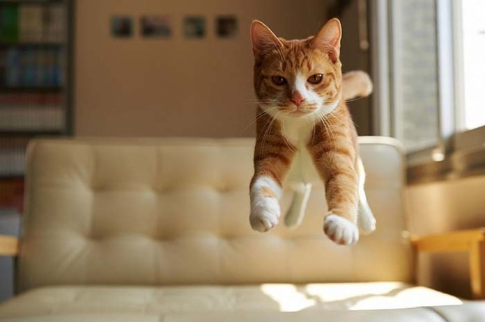 cat floats above a couch leap day