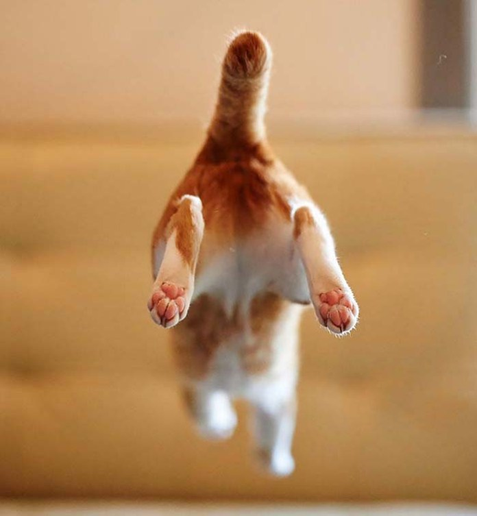 kitty jumps and shows its rear end leap day