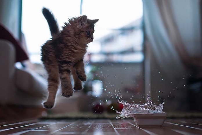 kitten leaps because it got scared of water