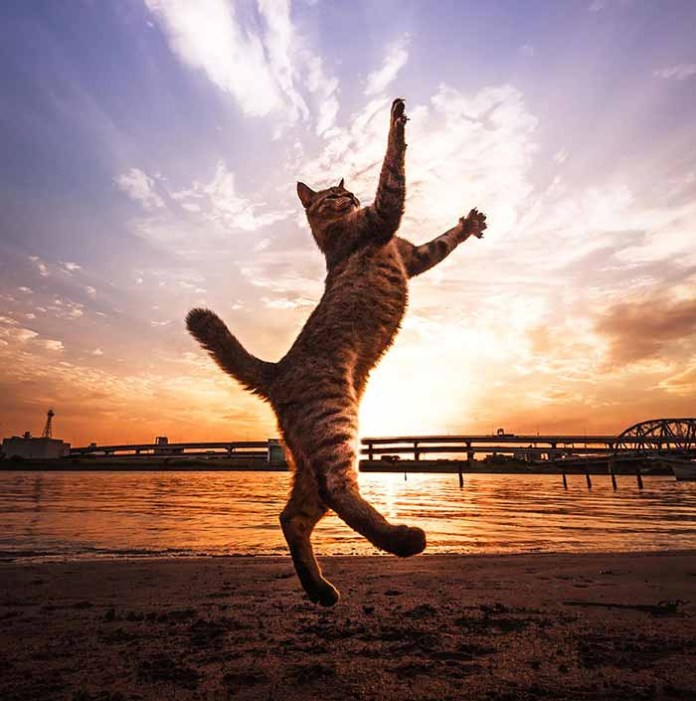 cat floats in the sky during the sunset leap day