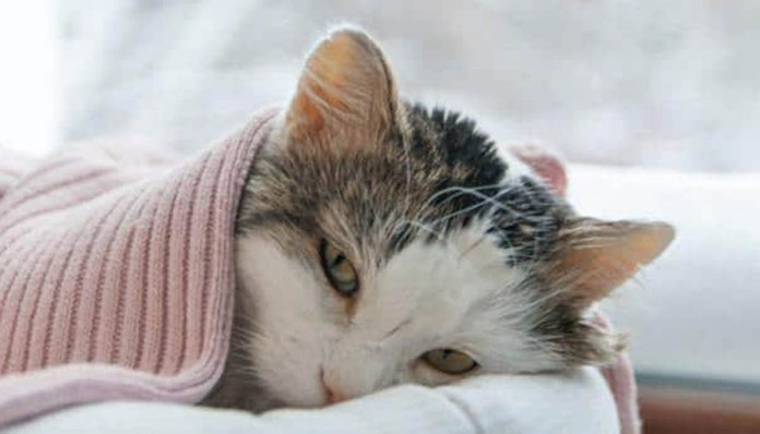 a sick kitty lays on a pink blanket