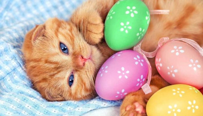 a kitten with easter eggs