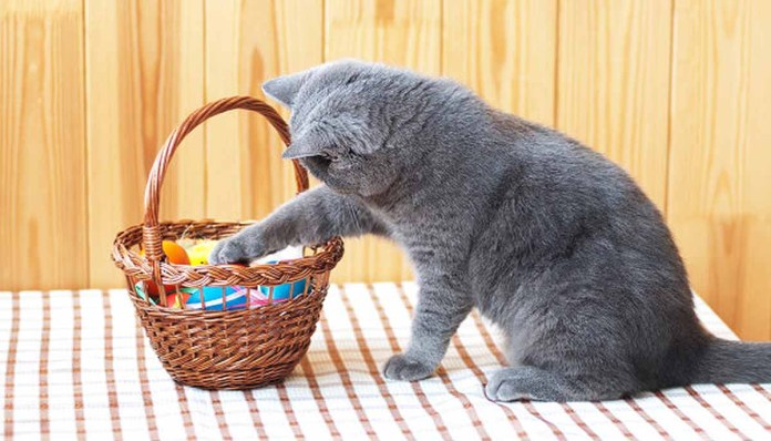 cat paws at an Easter basket
