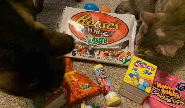easter candy with cats