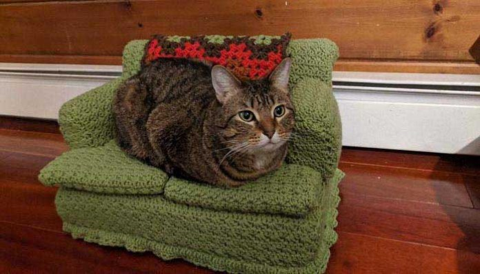 a cute tabby cat lays on a green crochet cat couch