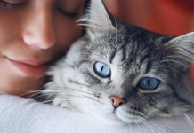 a woman hugs her blue eyed cat