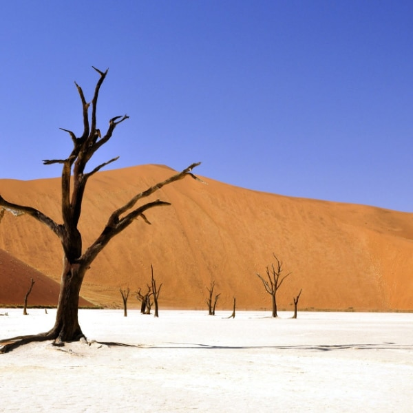 barren trees in the desert during a drought
