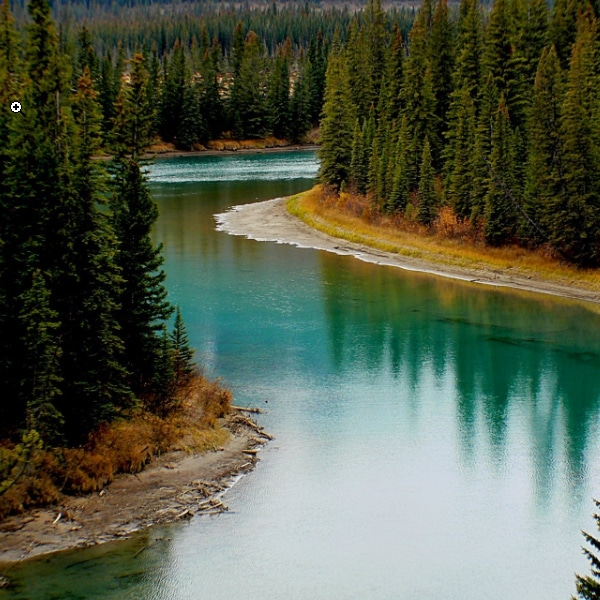 river evergreens