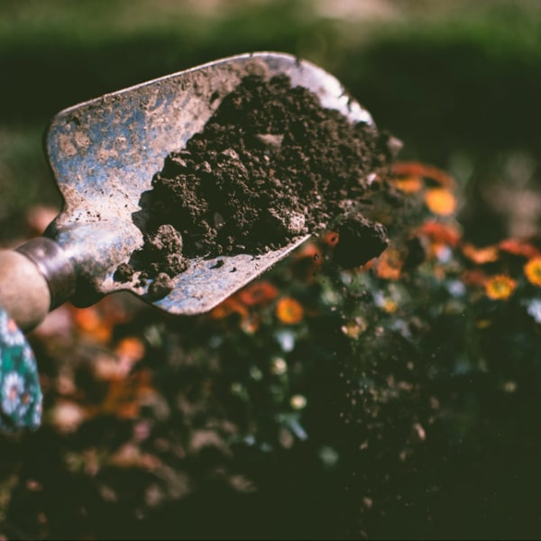 trowel in soil for gardening