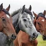 ウイニングポスト8 2017攻略 序盤おすすめ繁殖牝馬と配合相手 82年スタート