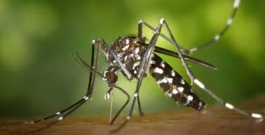 Amazonia-ICEMR-Perú-recibe-importantes-fondos-para-combatir-la-Malaria