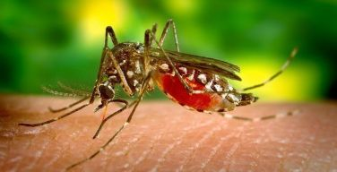Especialistas-en-mosquitos-de-SC-Johnson-aconsejan