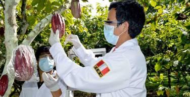 PRODUCE-cofinancia-innovación-tecnológica-del-sector-cacaotero