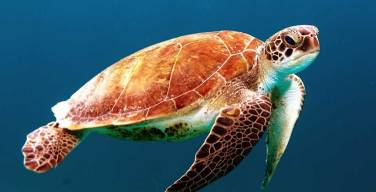 Cumbre Mundial del Océano cerró con cauteloso optimismo