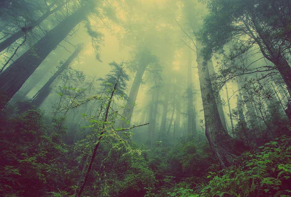 HP-se-compromete-a-ser-más-positiva-para-los-bosques