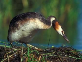 V dolech slouží ptákům stovky budek
