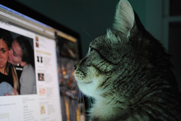 A furry friend stays  current by checking his News Feed. Facebook recently released  Paper, an as-of-now iPhone-exclusive app that hopes to refresh  the traditional  Facebook layout  for mobile users.  (Photo/Wikimedia  Commons)