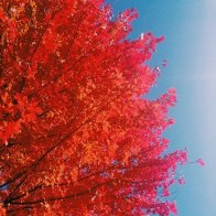 """""""Vibrant Fall colors""""- Submitted by Stephen Myers"""