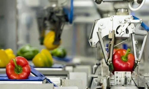 Robot phân loại ớt ngọt nhanh như chớp