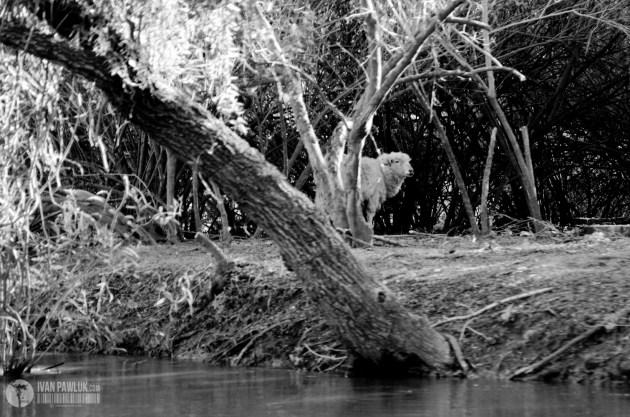 Crecida del Río paraná , islas frente a la ciudad de Rosario inundadas © IVAN PAWLUK http://ivanpawluk.com/ reservados todos los derechos / all rights reserved