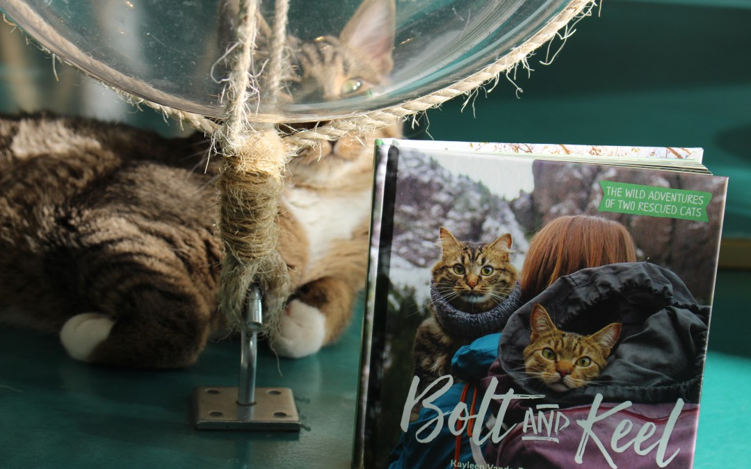 Video Review: Bolt and Keel by Kayleen Vanderree
