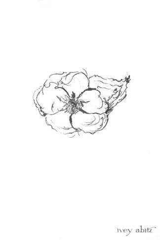 Emmaline Brooch drawing by Ivey Abitz