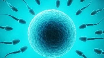 Σπερματέγχυση, η πιο απλή μέθοδος υποβοηθούμενης αναπαραγωγής