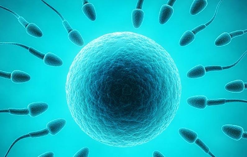 spermategxusi