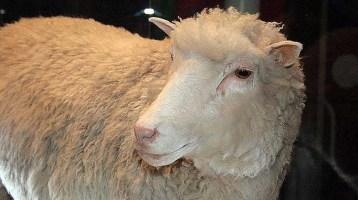 20 χρόνια από την κλωνοποίηση της Ντόλυ