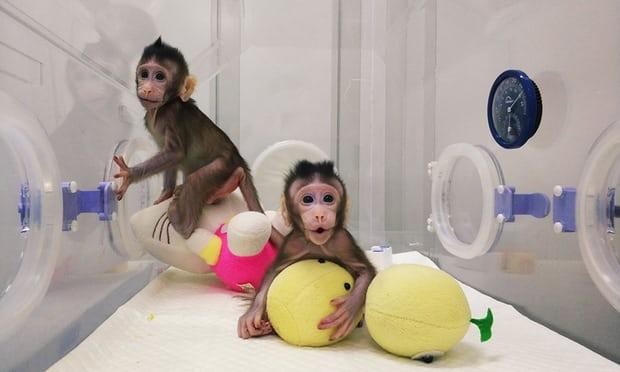 Πρώτη κλωνοποίηση μαϊμούδων.