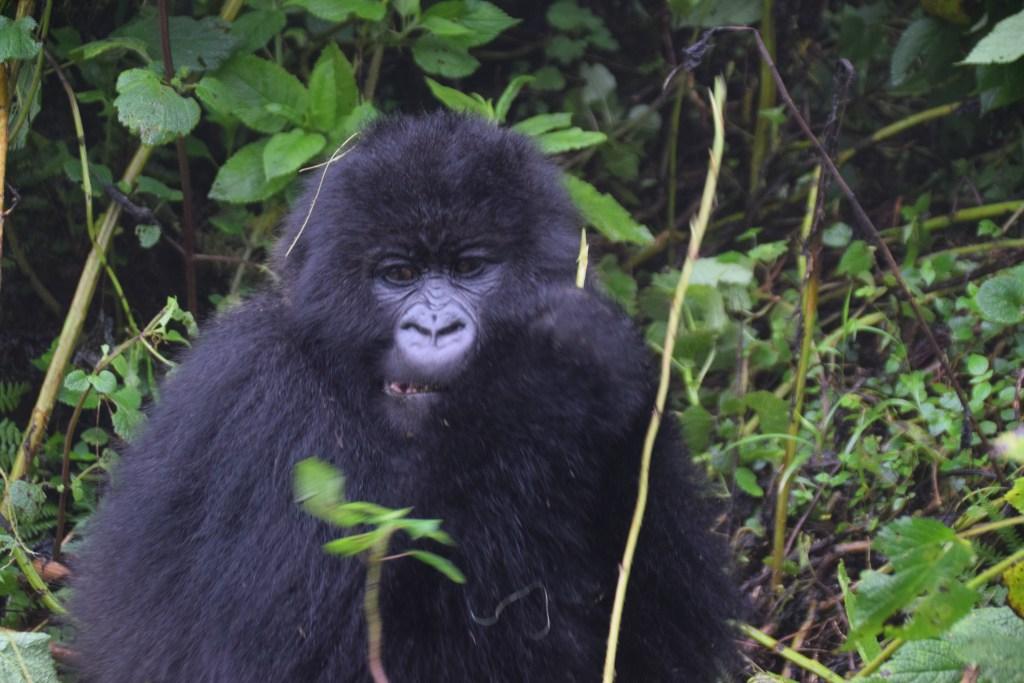 Rwanda tour 8 giorni