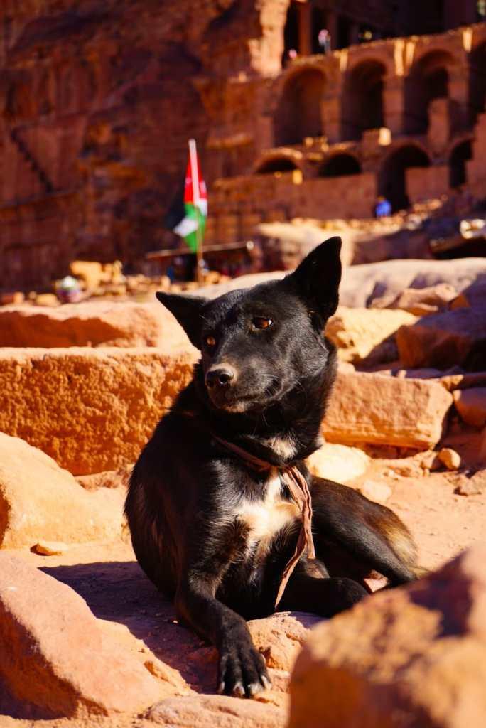 cane nero a petra