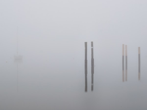 foggy morning, stakes in the water