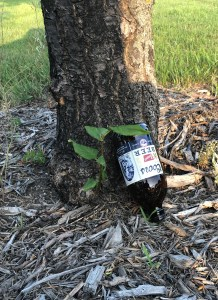 Image of a Coors beer bottle leaning against a tree