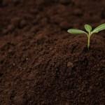 初心者向け、園芸用の土の種類と選び方をマスターしよう!