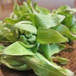ふきのとうの味噌汁が、いつでも作れる保存方法♪ よく似た毒草との見分け方も!