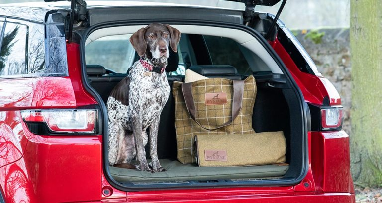 Springer Spaniel sitting on a large waterproof travel mat, with a dog blanket a tote bag in the back of an estate car