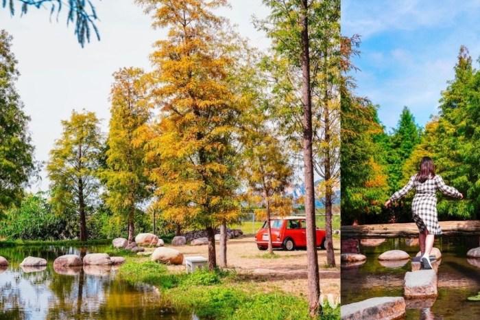 后里泰安國小旁池畔羽粼落羽松悄悄轉紅了,IG打卡正夯的濃濃秋意美景!
