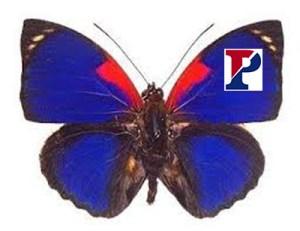 penn-butterfly