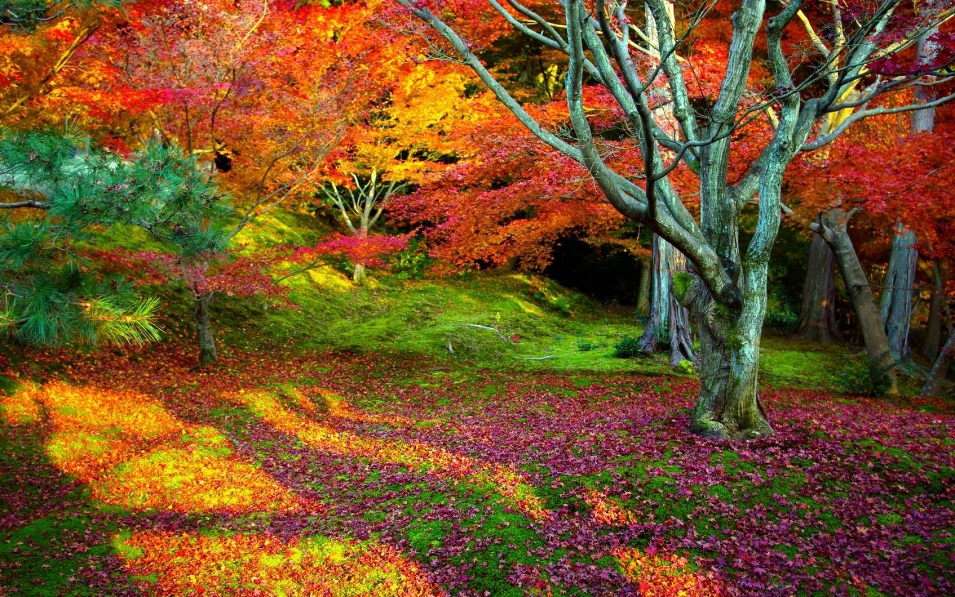 landscape tree trees leaves leaf beauty bright colorful