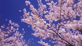 法人税務顧問 毎月訪問プラン (月々2万円~、決算料8万円~)