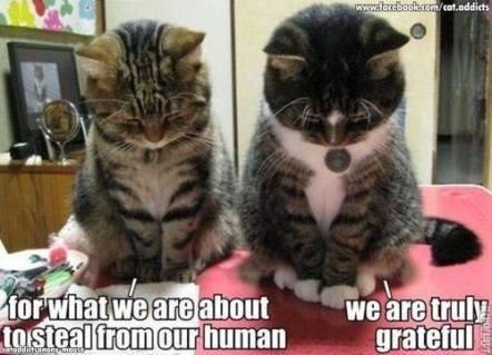 Random Cat Craziness 04