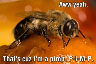 The Male Honeybee 02