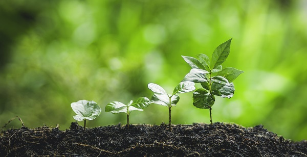 Formas de conseguir créditos de carbono
