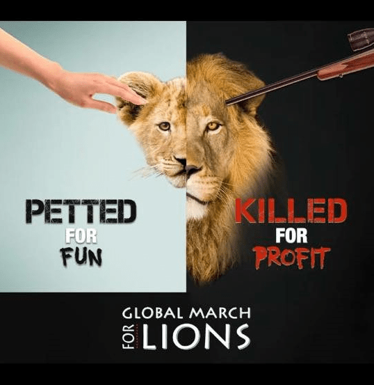 Petted Lion_2