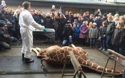 Marius-the-giraffe