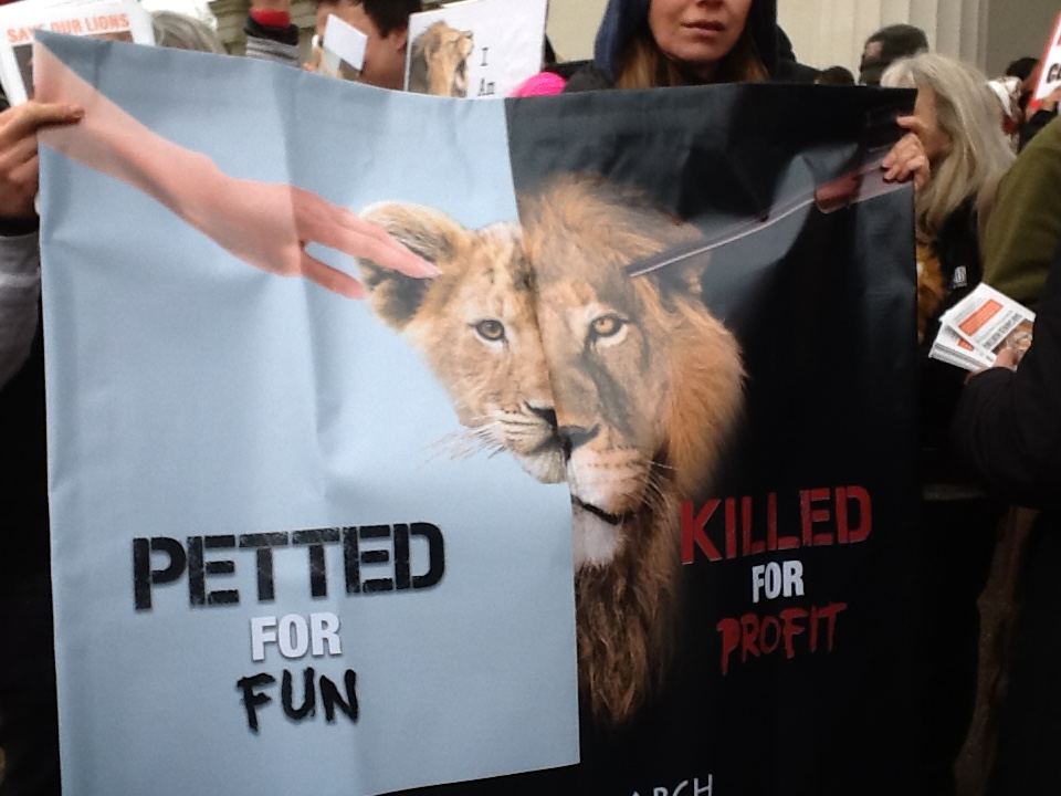 March for Lions_28 November 2015 014
