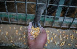 FOUR PAWS Gaza Zoo Mission