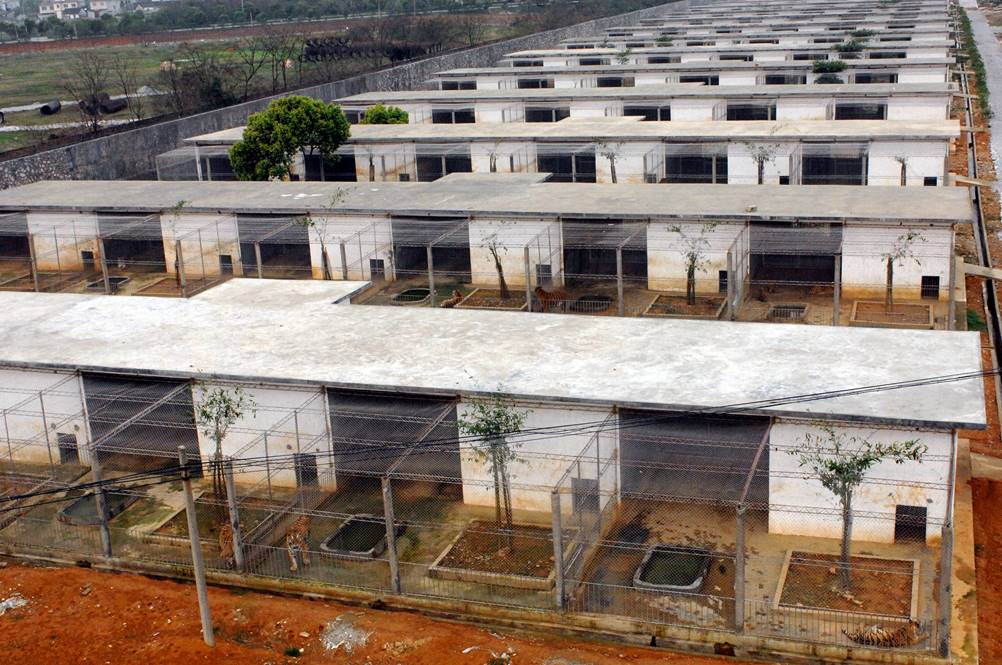 Tiger Farm in China