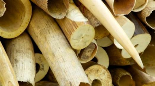 ivory_stockpile-4-600x443-600x336